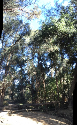 Fryman Rainforest