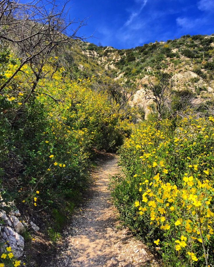 Spring at Switzer Fall Trail