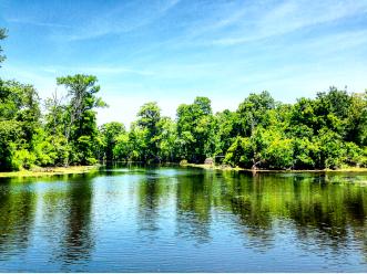 Bayou Swamp