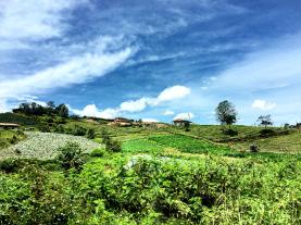 Green Medellin