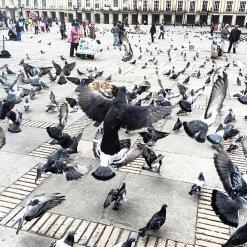 Pigeons Plaza Bolivar
