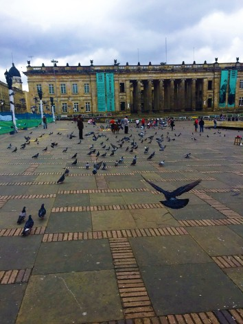Pigeons at Plaza Bolivar