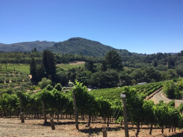 Sonoma Benziger Vineyards