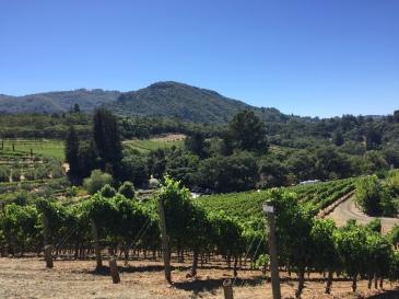 Sonoma Benziger Vineyards