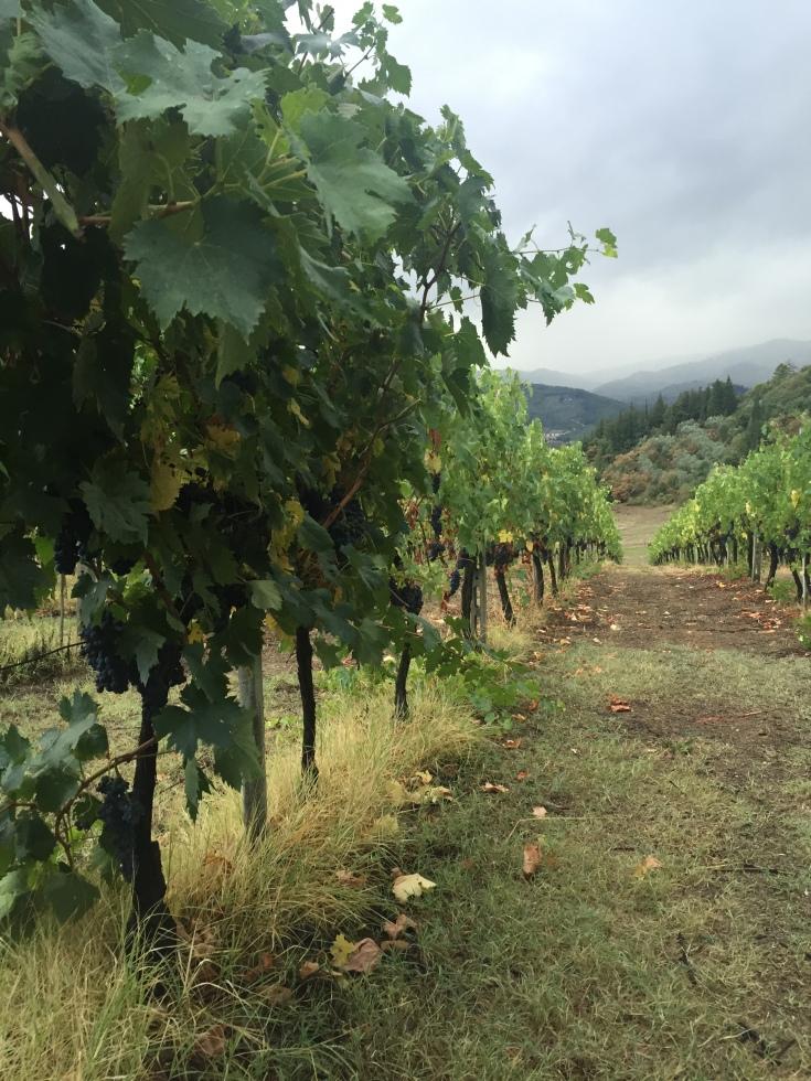 Chianti in Greve Winery