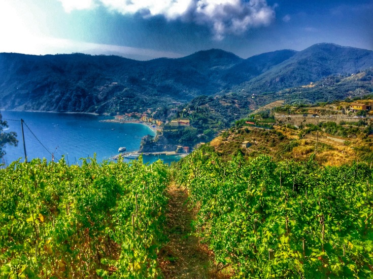 Wineries on the way to Monterosso Al Mare