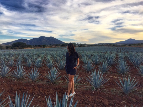 Jose Cuervo Agave Fields